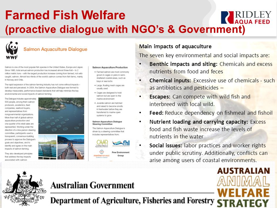 Farmed Fish Welfare (proactive dialogue with NGO's & Government) Main impacts of aquaculture The seven key environmental and social impacts are: Benthic impacts and siting: Chemicals and excess nutrients from food and feces Chemical inputs: Excessive use of chemicals - such as antibiotics and pesticides – Escapes: Can compete with wild fish and interbreed with local wild.