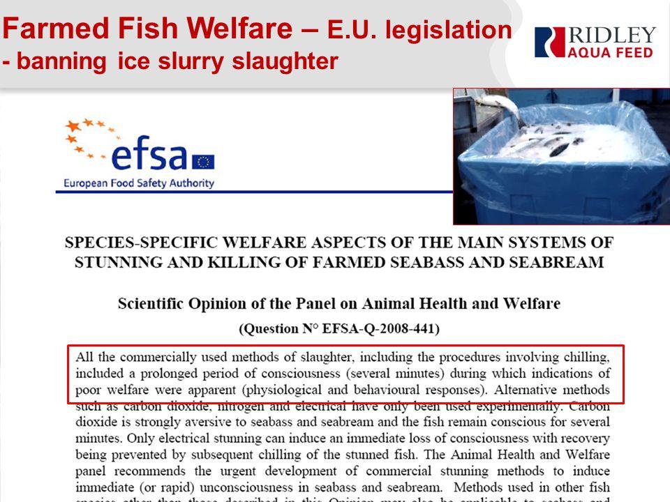 Farmed Fish Welfare – E.U. legislation - banning ice slurry slaughter