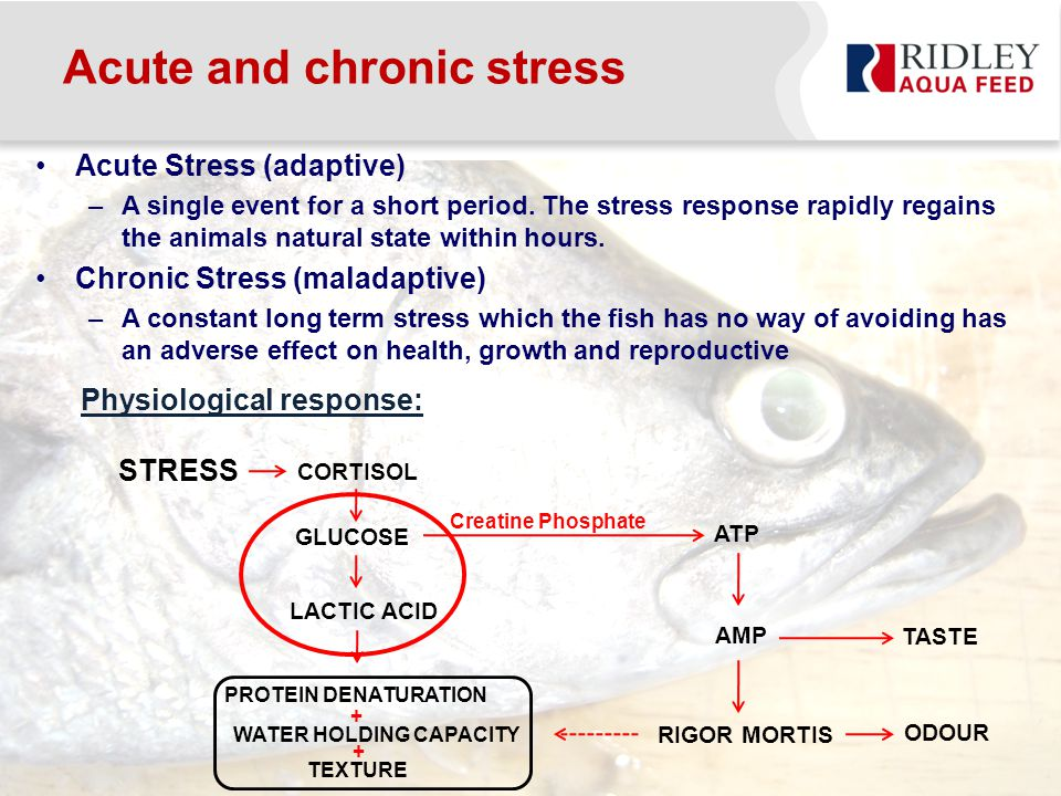 Acute and chronic stress Acute Stress (adaptive) –A single event for a short period.