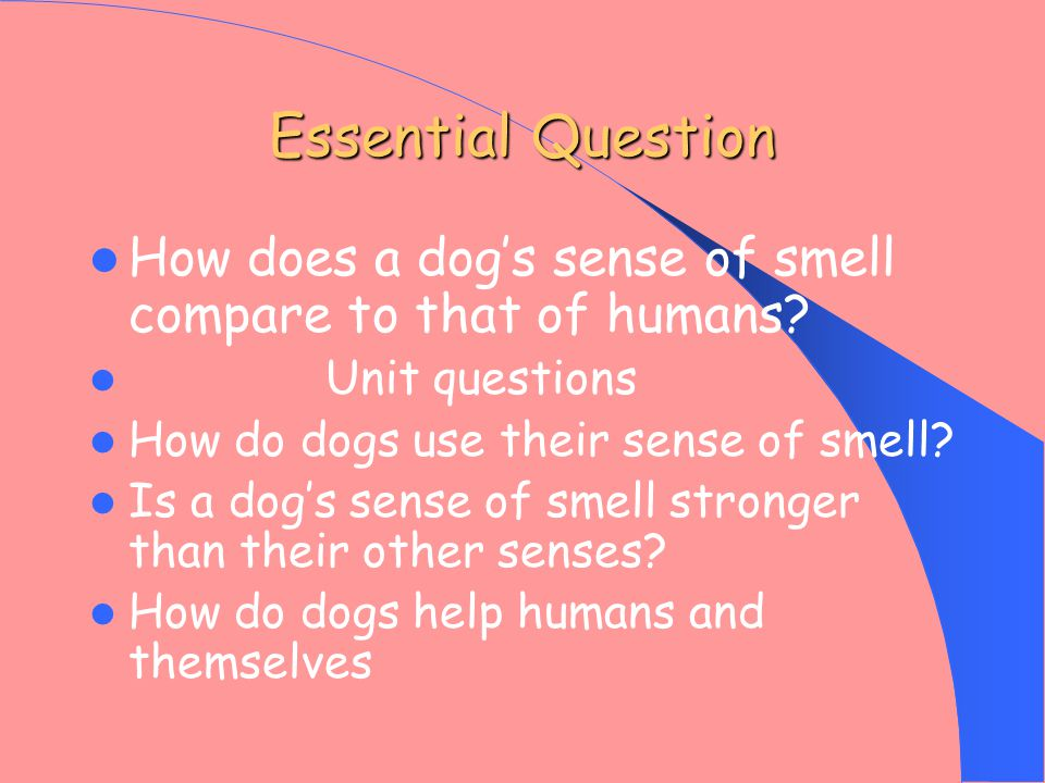 Essential Question How does a dog's sense of smell compare to that of humans.