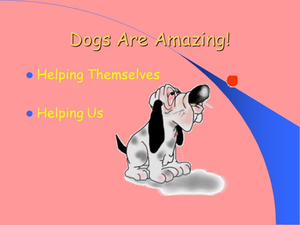 Dogs Are Amazing ! Helping Themselves Helping Us