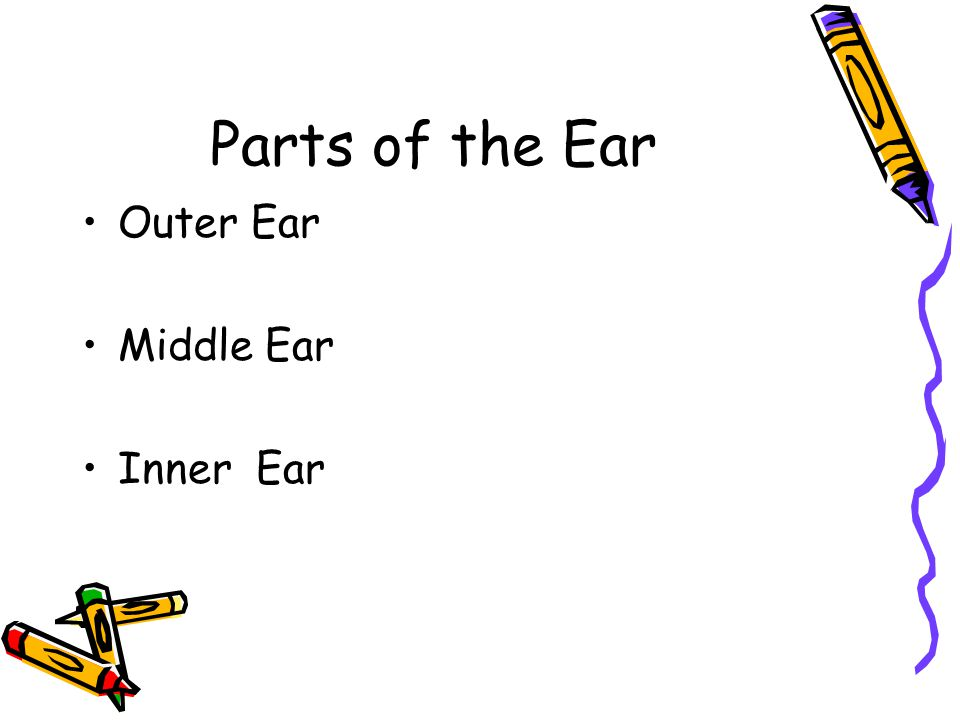 Parts of the Ear Outer Ear Middle Ear Inner Ear