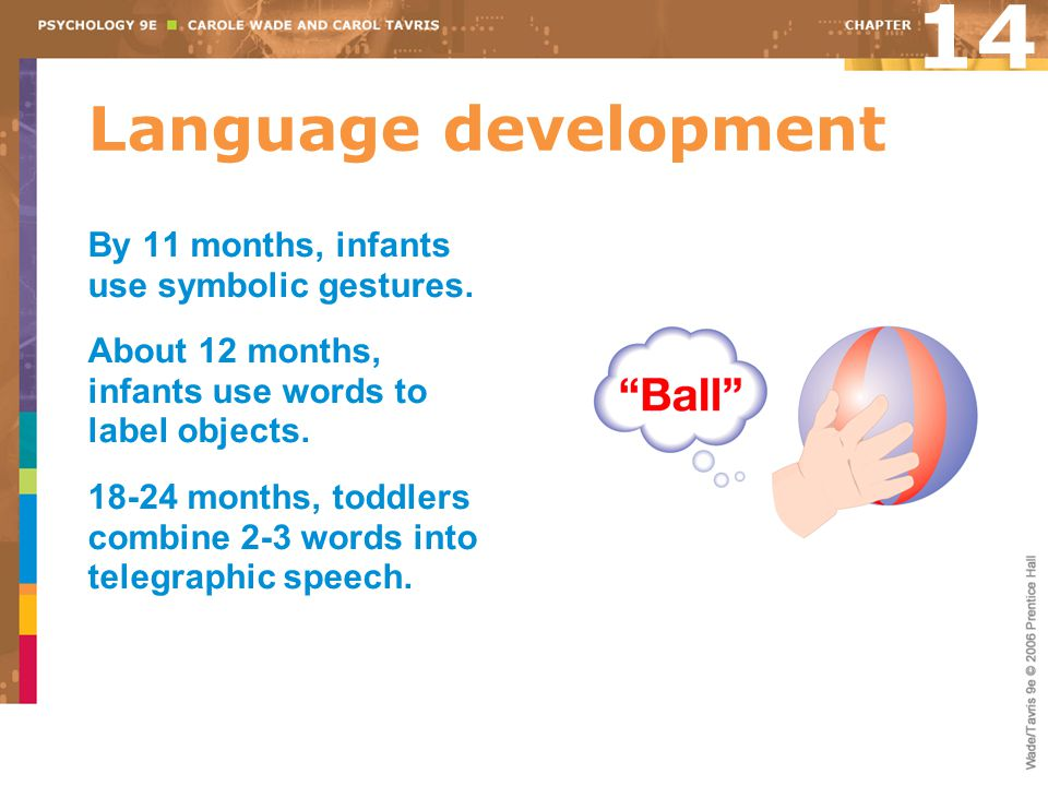 Language development 14 By 11 months, infants use symbolic gestures. About 12 months, infants use words to label objects. 18-24 months, toddlers combi