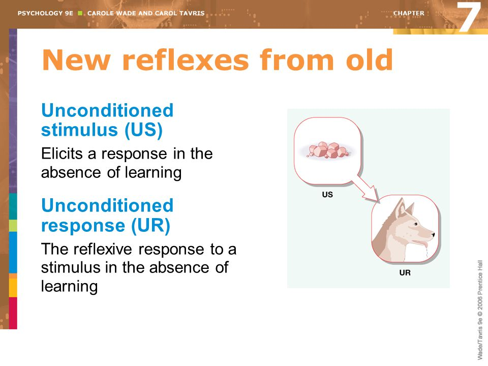 New reflexes from old A neutral stimulus is then regularly paired with an unconditioned stimulus. 7