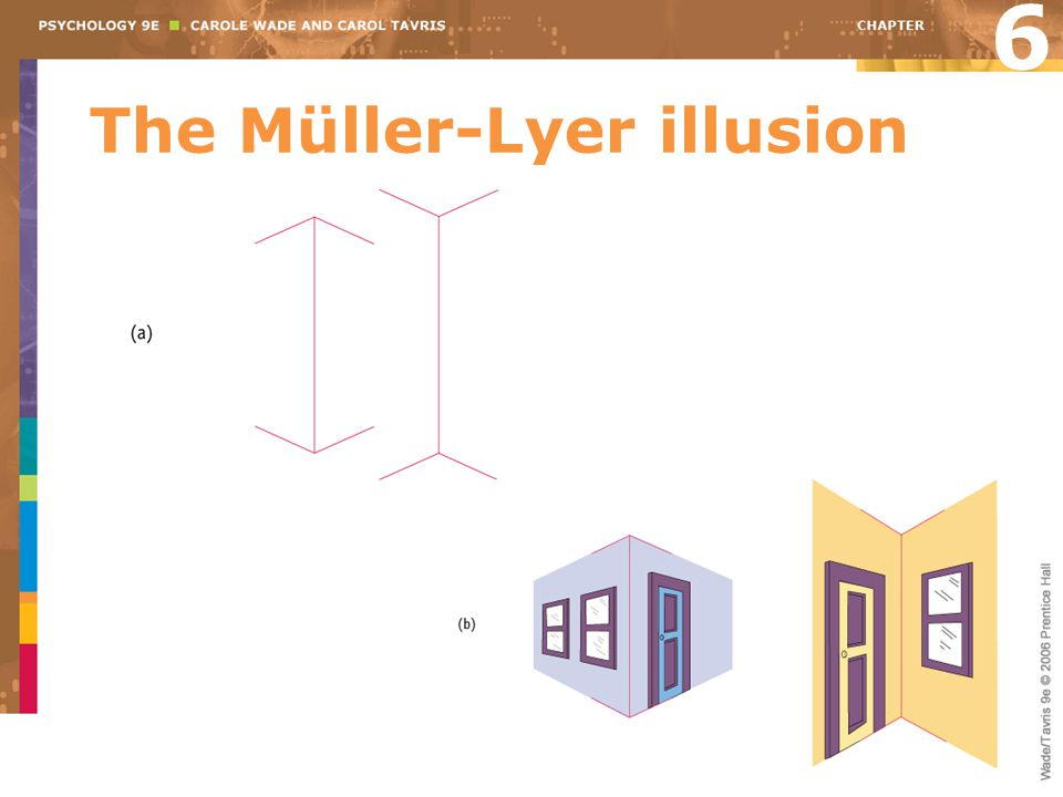 The Müller-Lyer illusion 6