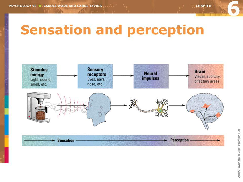 Sensation and perception 6