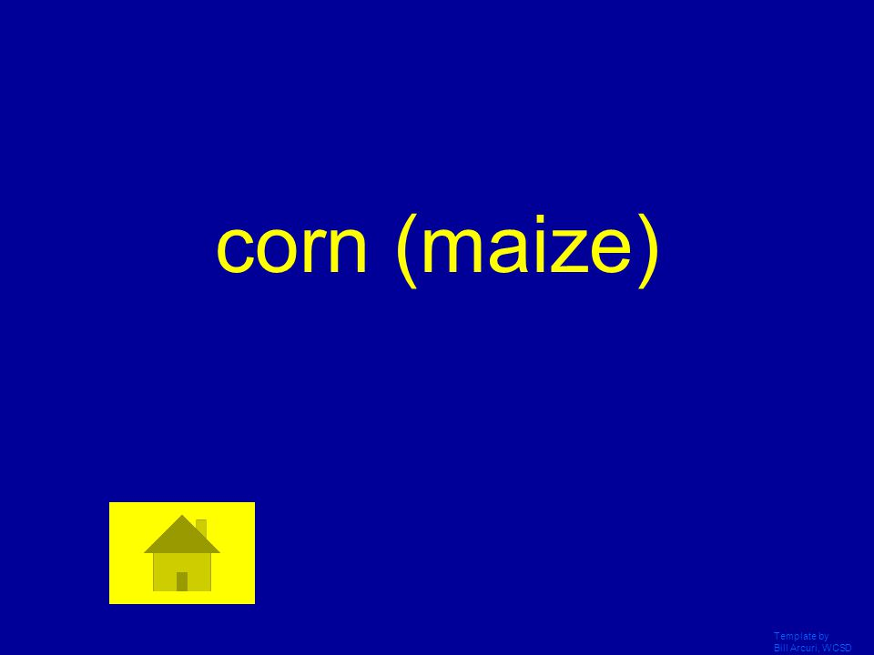 Template by Bill Arcuri, WCSD The 1 st domesticated crops in Mesoamerican diet included beans, squash, and this staple Answer