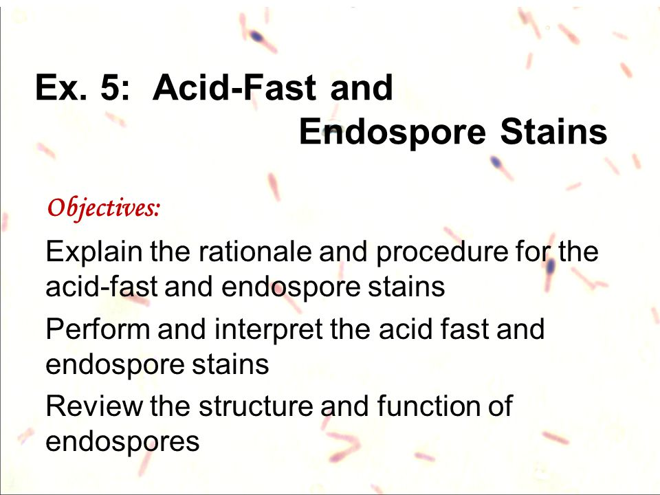 Ex. 5: Acid-Fast and Endospore Stains Objectives: Explain the rationale and procedure for the acid-fast and endospore stains Perform and interpret the