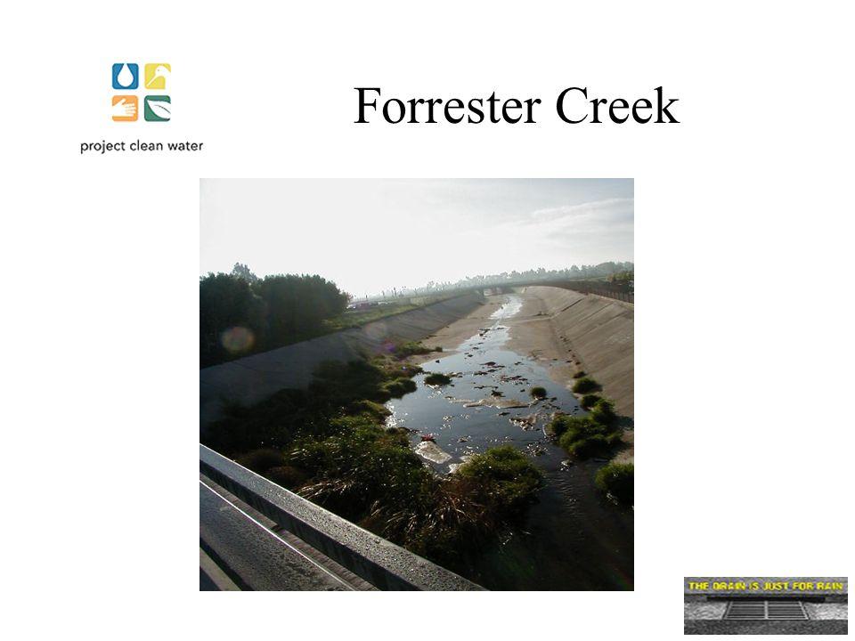 Forrester Creek
