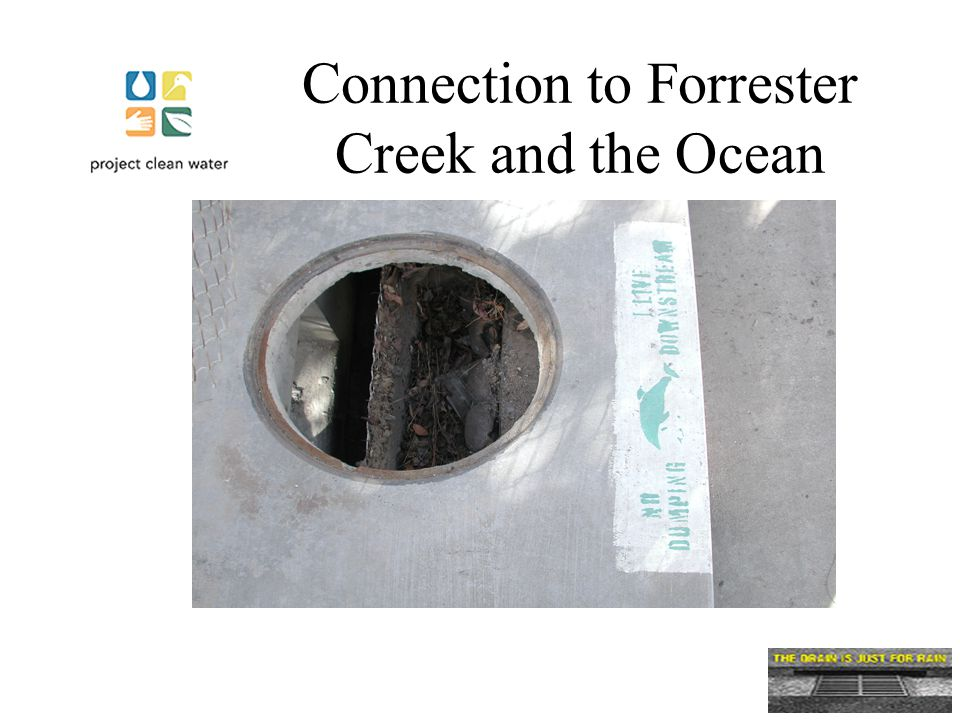 Connection to Forrester Creek and the Ocean