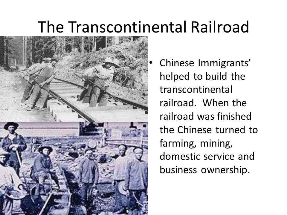 The Transcontinental Railroad Chinese Immigrants' helped to build the transcontinental railroad. When the railroad was finished the Chinese turned to