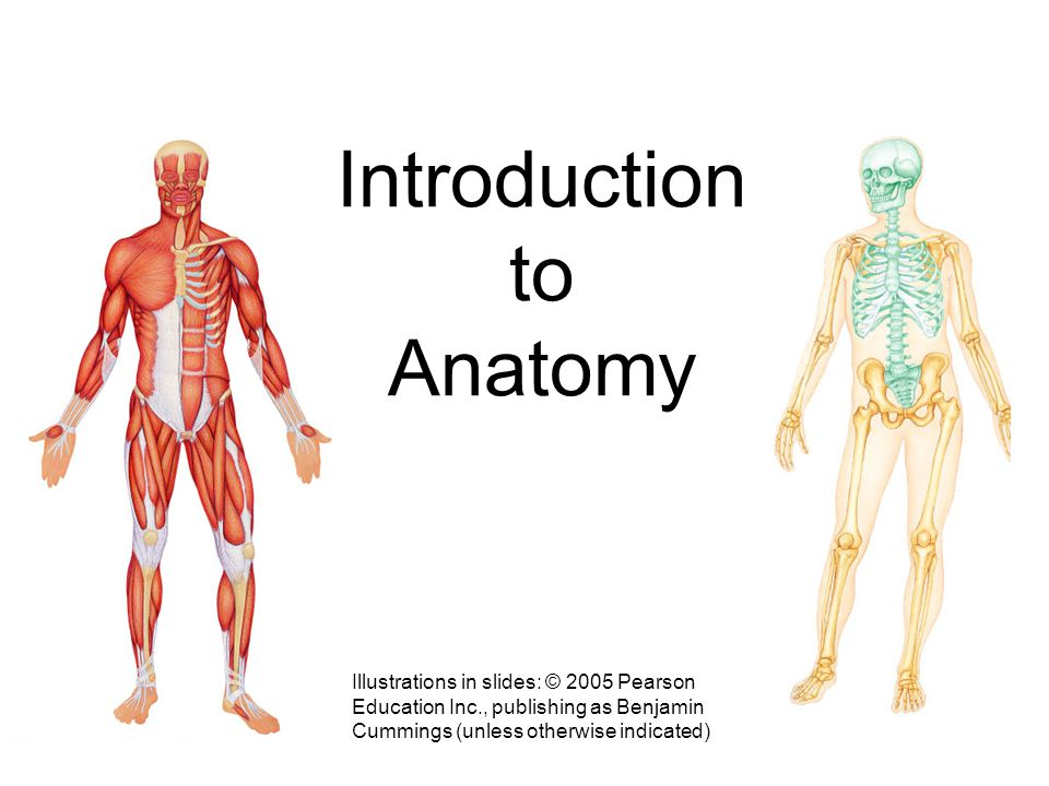 Introduction to Anatomy (a) Illustrations in slides: © 2005 Pearson Education Inc., publishing as Benjamin Cummings (unless otherwise indicated)