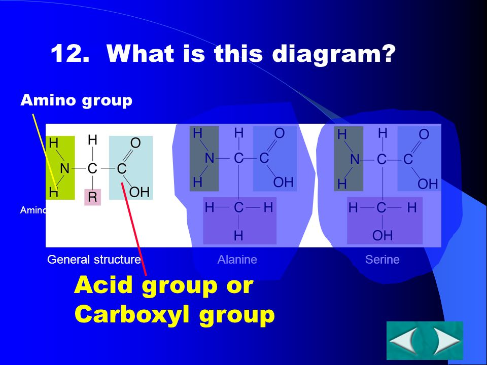 General structureAlanineSerine Section 2-3 Go to Section: Amino groupCarboxyl group 12. What is this diagram? Amino group Acid group or Carboxyl group