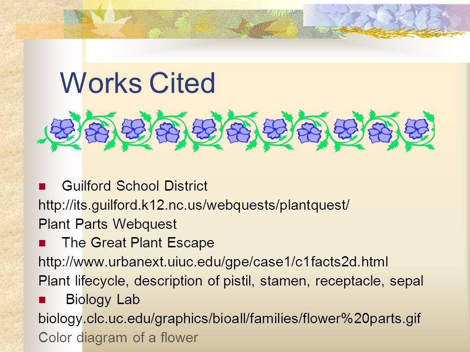 Works Cited Guilford School District http://its.guilford.k12.nc.us/webquests/plantquest/ Plant Parts Webquest The Great Plant Escape http://www.urbanext.uiuc.edu/gpe/case1/c1facts2d.html Plant lifecycle, description of pistil, stamen, receptacle, sepal Biology Lab biology.clc.uc.edu/graphics/bioall/families/flower%20parts.gif Color diagram of a flower