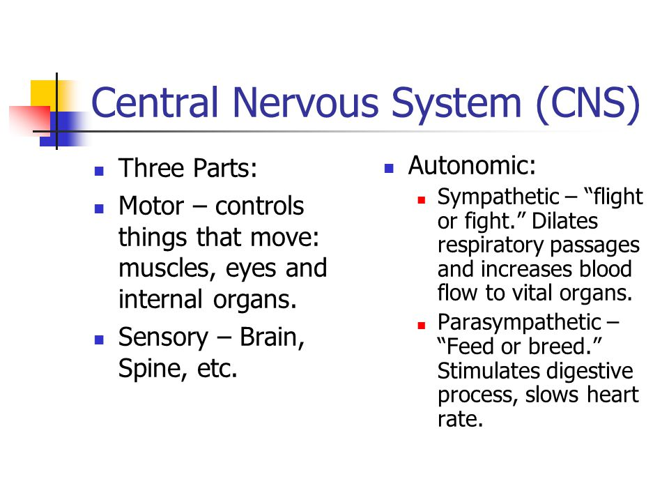 Central Nervous System (CNS) Three Parts: Motor – controls things that move: muscles, eyes and internal organs.