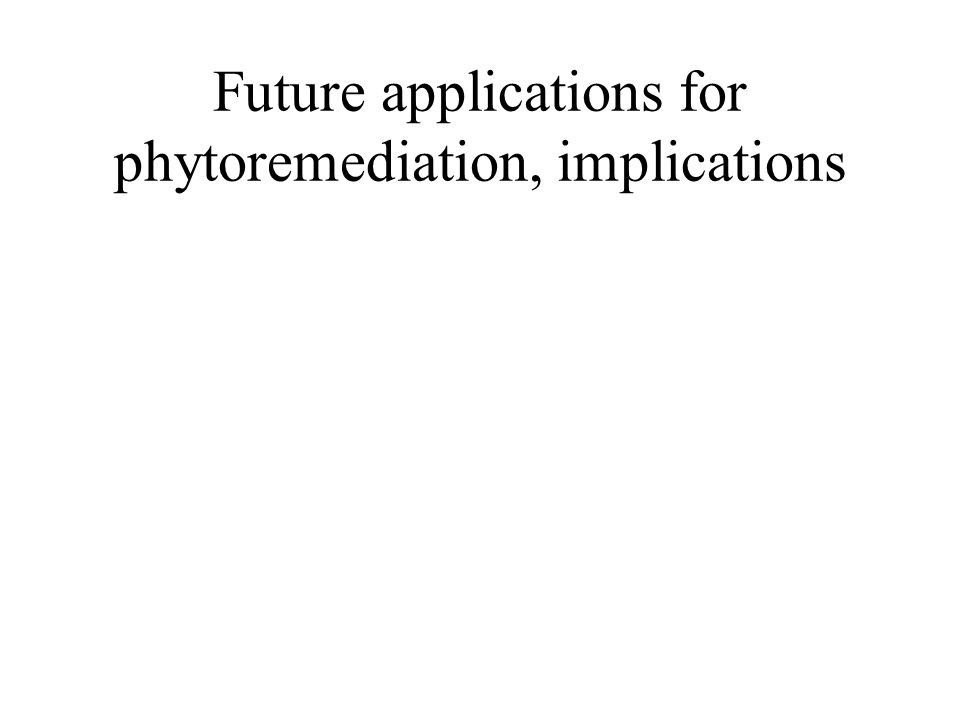 Future applications for phytoremediation, implications