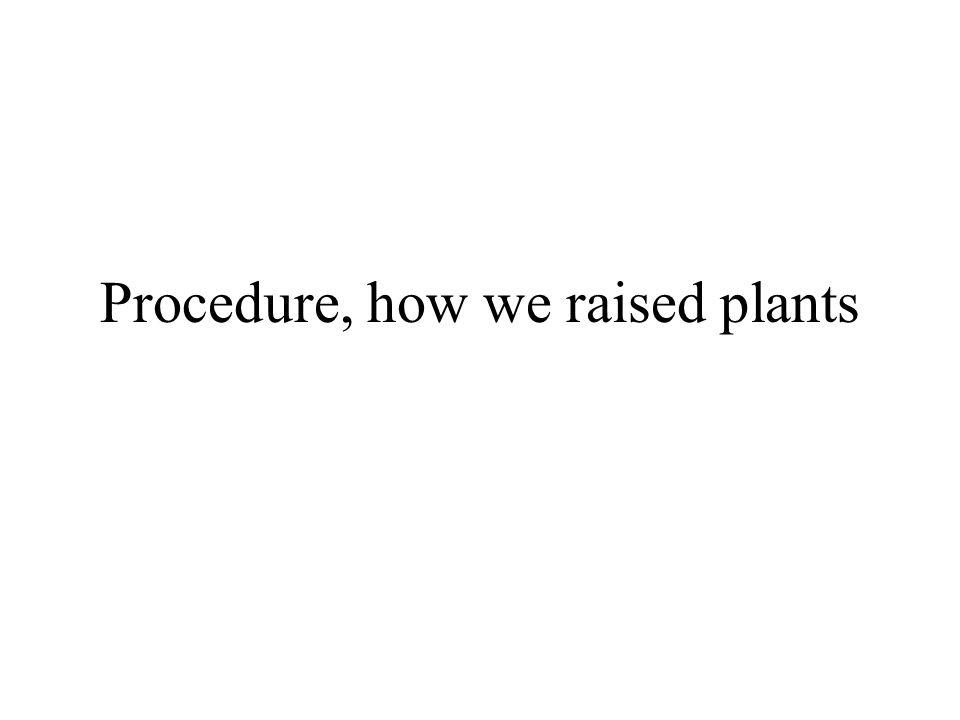 Procedure, how we raised plants