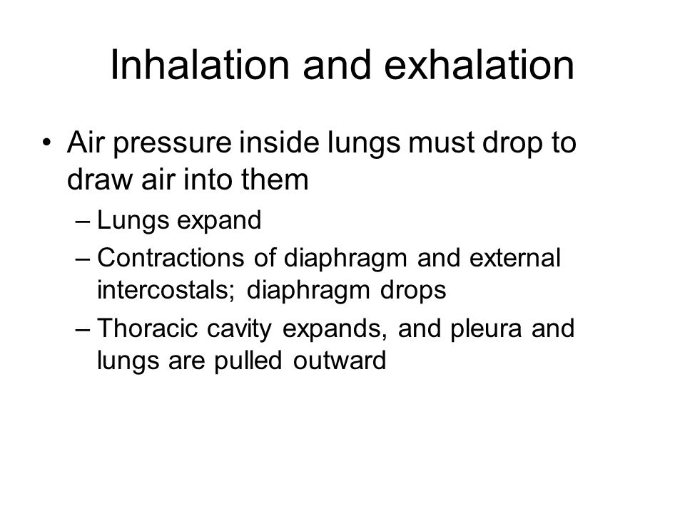 Inhalation and exhalation Air pressure inside lungs must drop to draw air into them –Lungs expand –Contractions of diaphragm and external intercostals; diaphragm drops –Thoracic cavity expands, and pleura and lungs are pulled outward