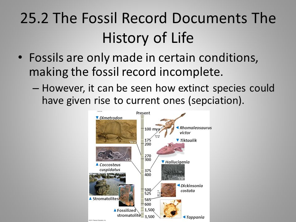25.2 The Fossil Record Documents The History of Life Fossils are only made in certain conditions, making the fossil record incomplete. – However, it c