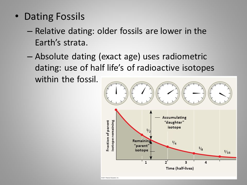 Dating Fossils – Relative dating: older fossils are lower in the Earth's strata. – Absolute dating (exact age) uses radiometric dating: use of half li