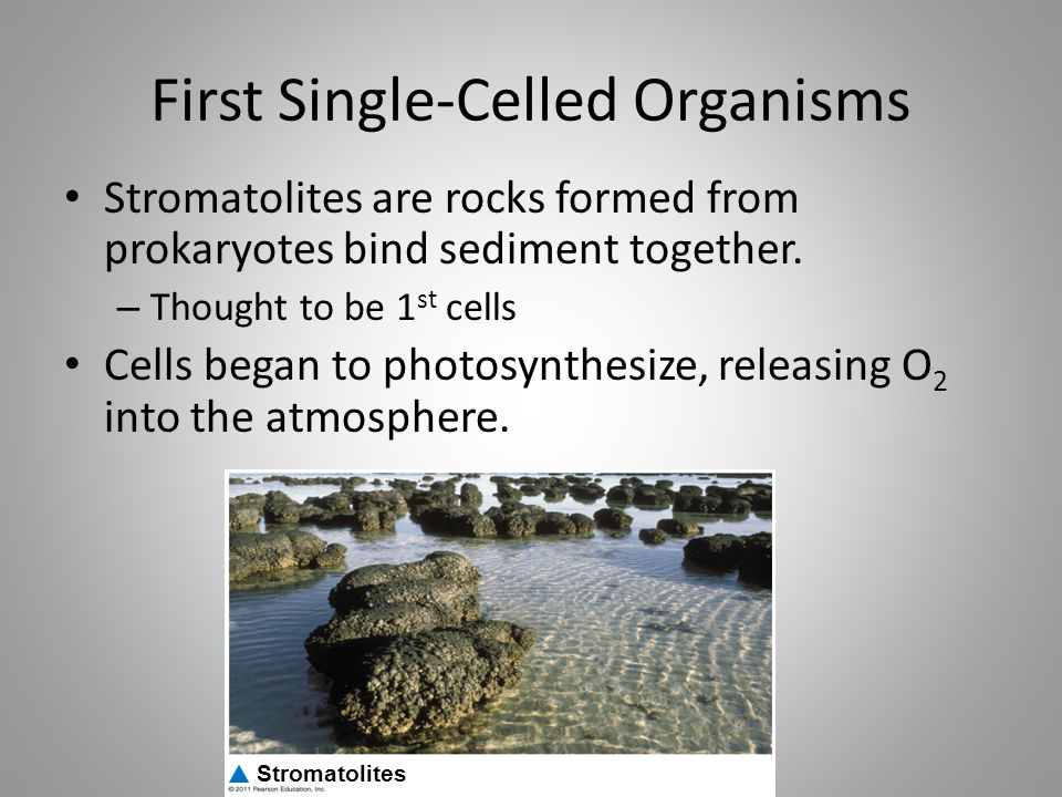 First Single-Celled Organisms Stromatolites are rocks formed from prokaryotes bind sediment together. – Thought to be 1 st cells Cells began to photos
