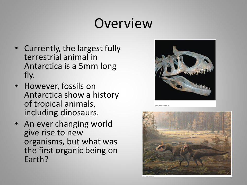 Overview Currently, the largest fully terrestrial animal in Antarctica is a 5mm long fly. However, fossils on Antarctica show a history of tropical an