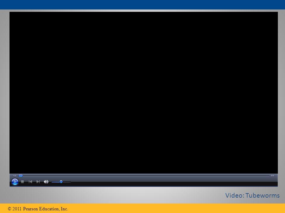 © 2011 Pearson Education, Inc. Video: Tubeworms