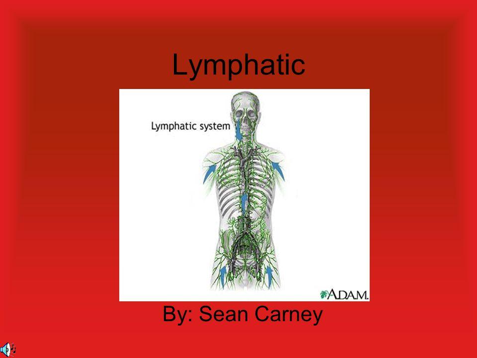 Lymphatic By: Sean Carney