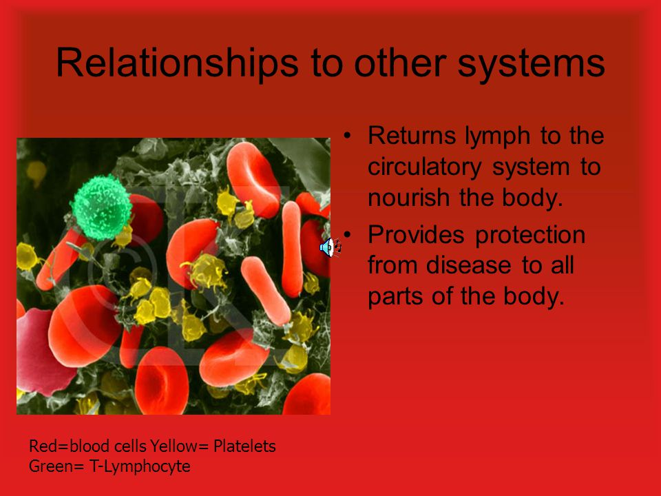 Relationships to other systems Returns lymph to the circulatory system to nourish the body.