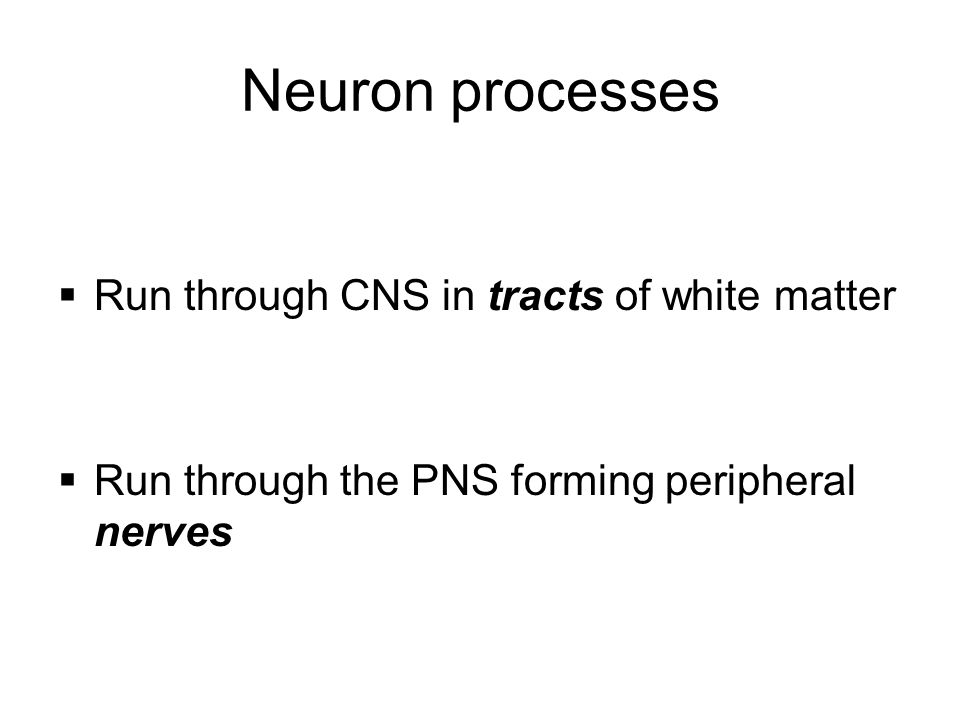 Neuron processes  Run through CNS in tracts of white matter  Run through the PNS forming peripheral nerves