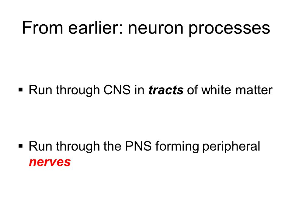 From earlier: neuron processes  Run through CNS in tracts of white matter  Run through the PNS forming peripheral nerves