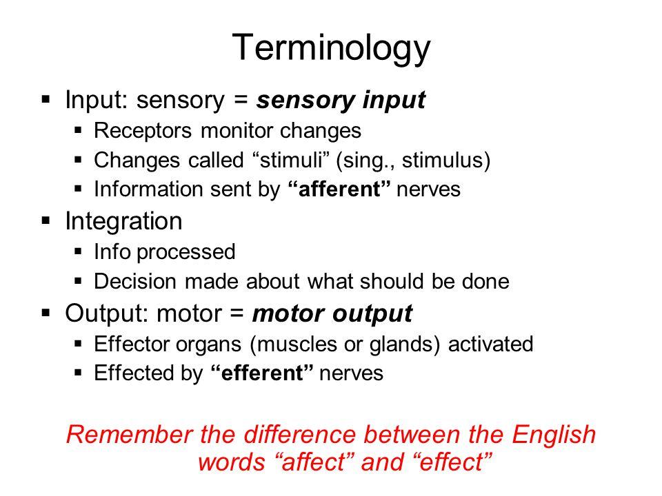 "Terminology  Input: sensory = sensory input  Receptors monitor changes  Changes called ""stimuli"" (sing., stimulus)  Information sent by ""afferent"""