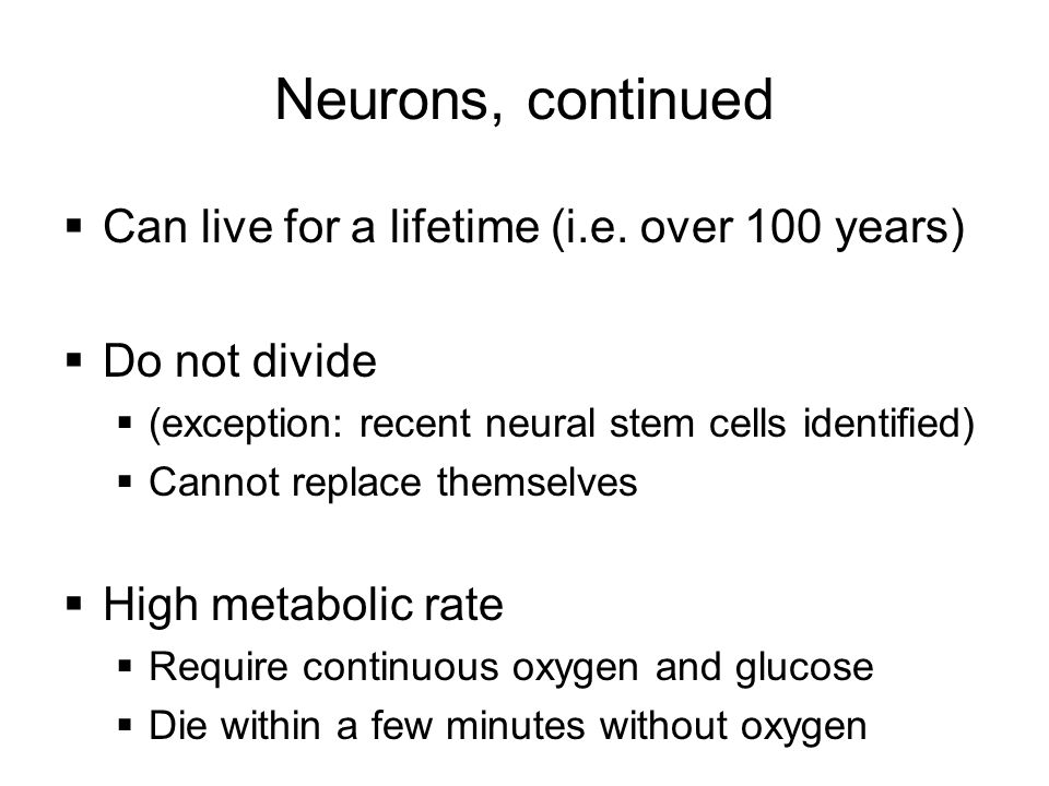 Neurons, continued  Can live for a lifetime (i.e. over 100 years)  Do not divide  (exception: recent neural stem cells identified)  Cannot replace