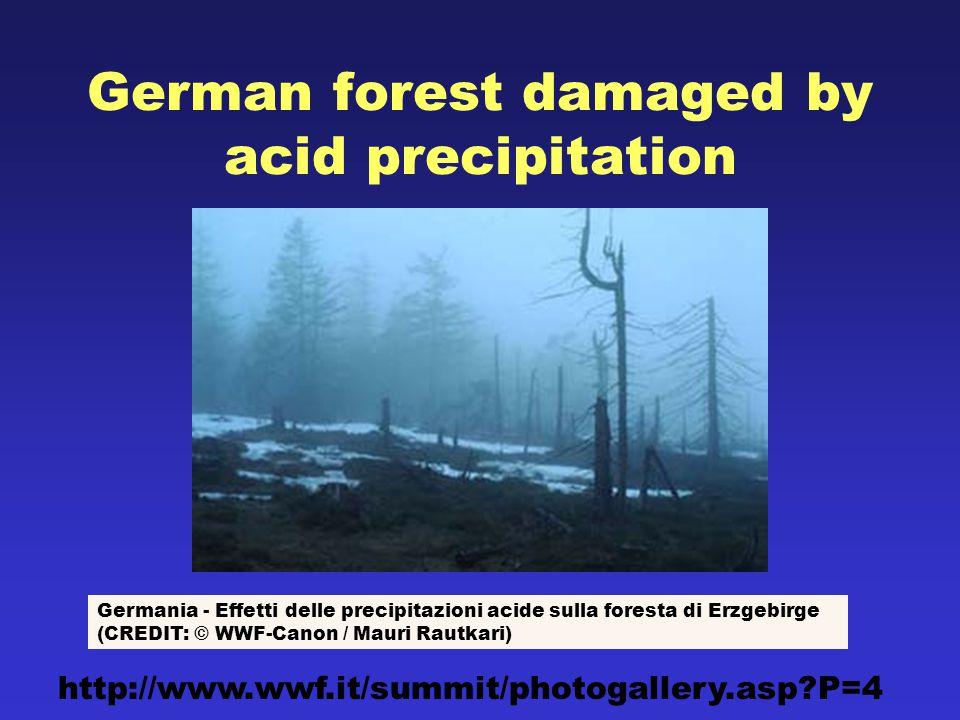 German forest damaged by acid precipitation Germania - Effetti delle precipitazioni acide sulla foresta di Erzgebirge (CREDIT: © WWF-Canon / Mauri Rautkari) http://www.wwf.it/summit/photogallery.asp P=4