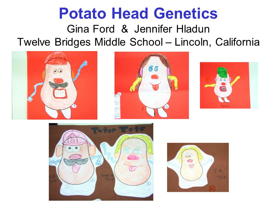 Overview ~Cumulative Assessment Project –Assignment Points (C – cooperatively with classmate) –Assessment Points (I – Individual application) ~3 Generations of Potato Heads – Parent Chromosomes of Mr.