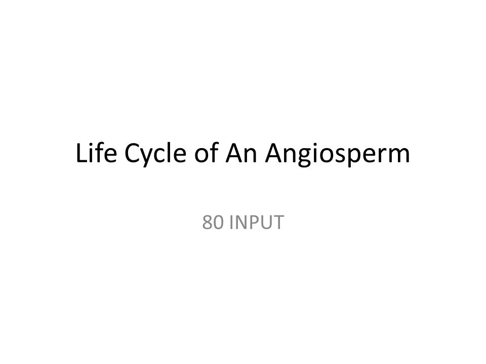 Life Cycle of An Angiosperm 80 INPUT