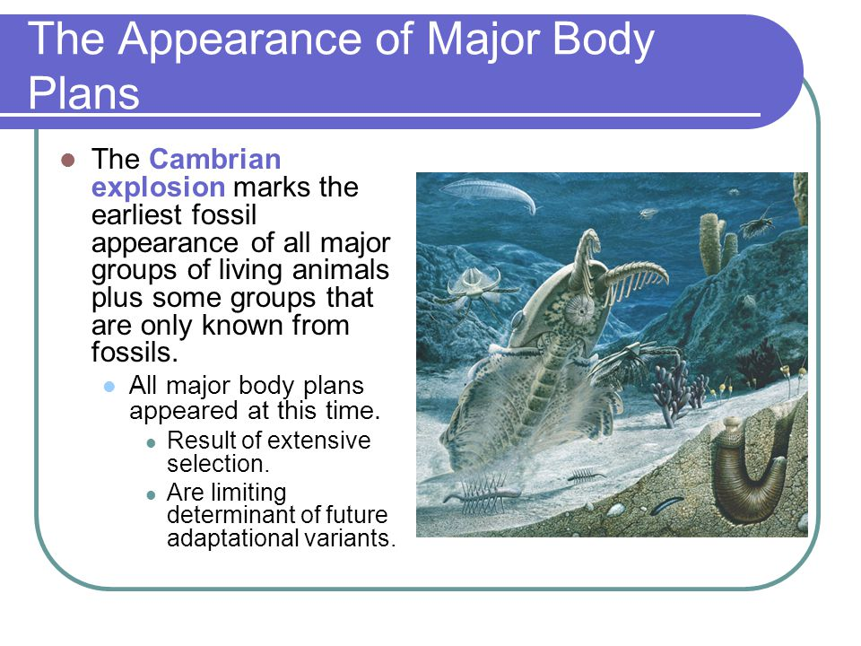 The Appearance of Major Body Plans The Cambrian explosion marks the earliest fossil appearance of all major groups of living animals plus some groups that are only known from fossils.