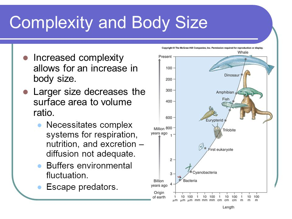Complexity and Body Size Increased complexity allows for an increase in body size.