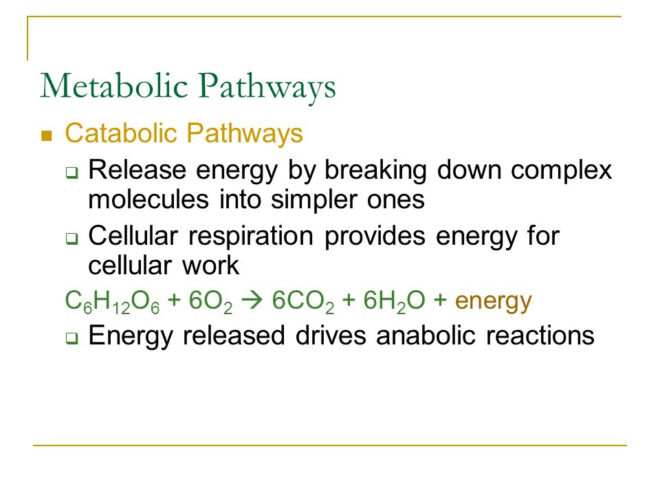 Metabolic Pathways Catabolic Pathways  Release energy by breaking down complex molecules into simpler ones  Cellular respiration provides energy for