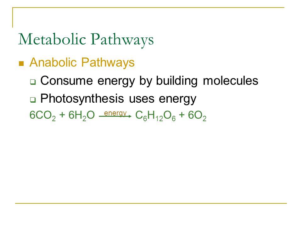 Metabolic Pathways Anabolic Pathways  Consume energy by building molecules  Photosynthesis uses energy 6CO 2 + 6H 2 O energy C 6 H 12 O 6 + 6O 2