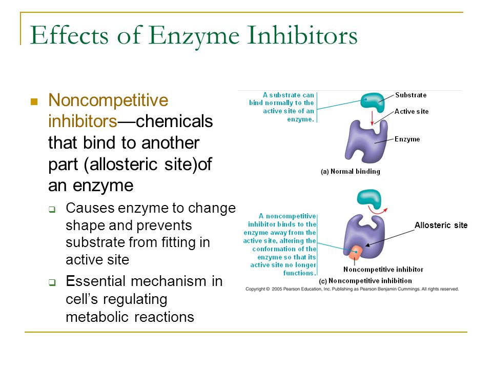 Effects of Enzyme Inhibitors Noncompetitive inhibitors—chemicals that bind to another part (allosteric site)of an enzyme  Causes enzyme to change sha