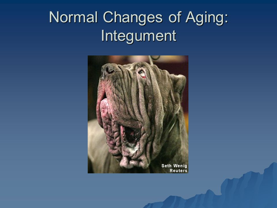 Normal Changes of Aging: Integument