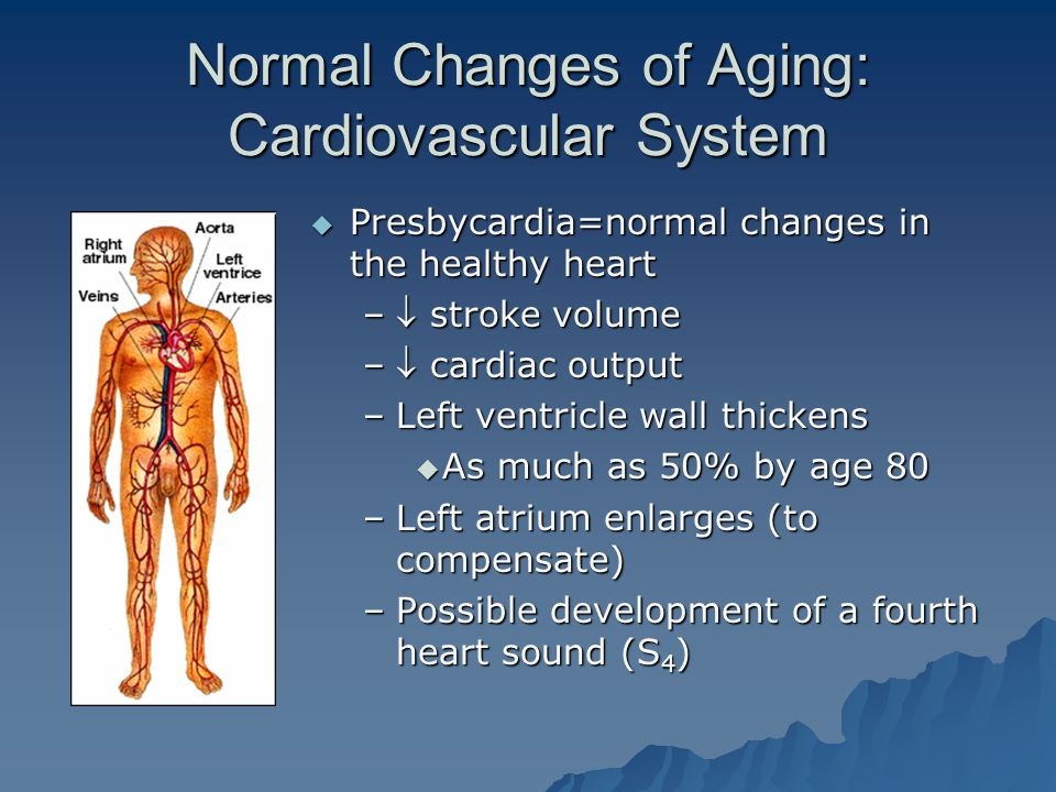 Normal Changes of Aging: Cardiovascular System  Presbycardia=normal changes in the healthy heart – stroke volume – cardiac output –Left ventricle wall thickens  As much as 50% by age 80 –Left atrium enlarges (to compensate) –Possible development of a fourth heart sound (S 4 )