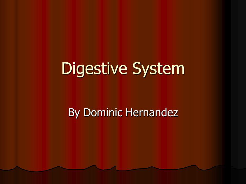 Digestive System By Dominic Hernandez