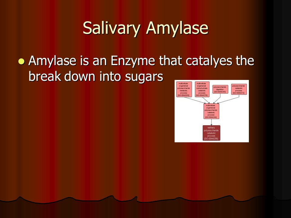Salivary Amylase Amylase is an Enzyme that catalyes the break down into sugars Amylase is an Enzyme that catalyes the break down into sugars