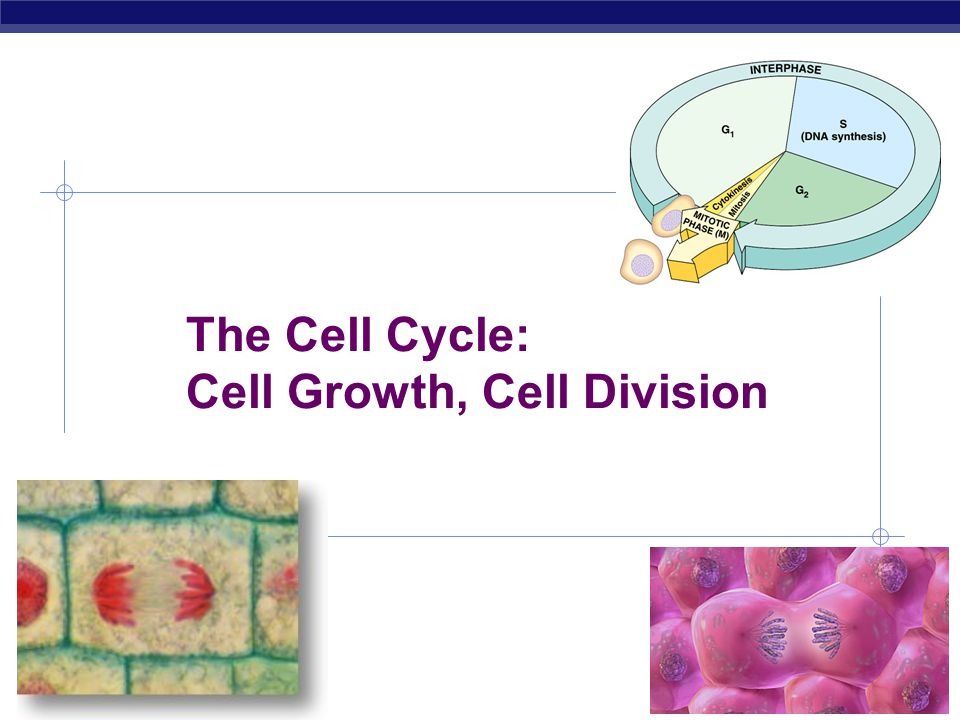 AP Biology 2007-2008 The Cell Cycle: Cell Growth, Cell Division