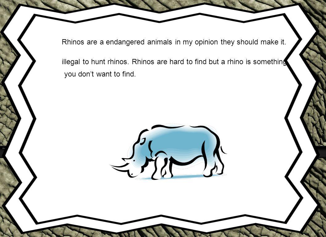 What Do rhinos Look Like.