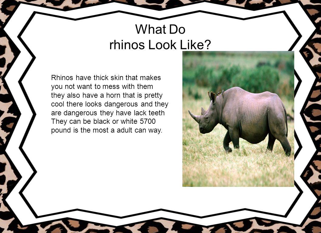 What Do rhinos Eat.