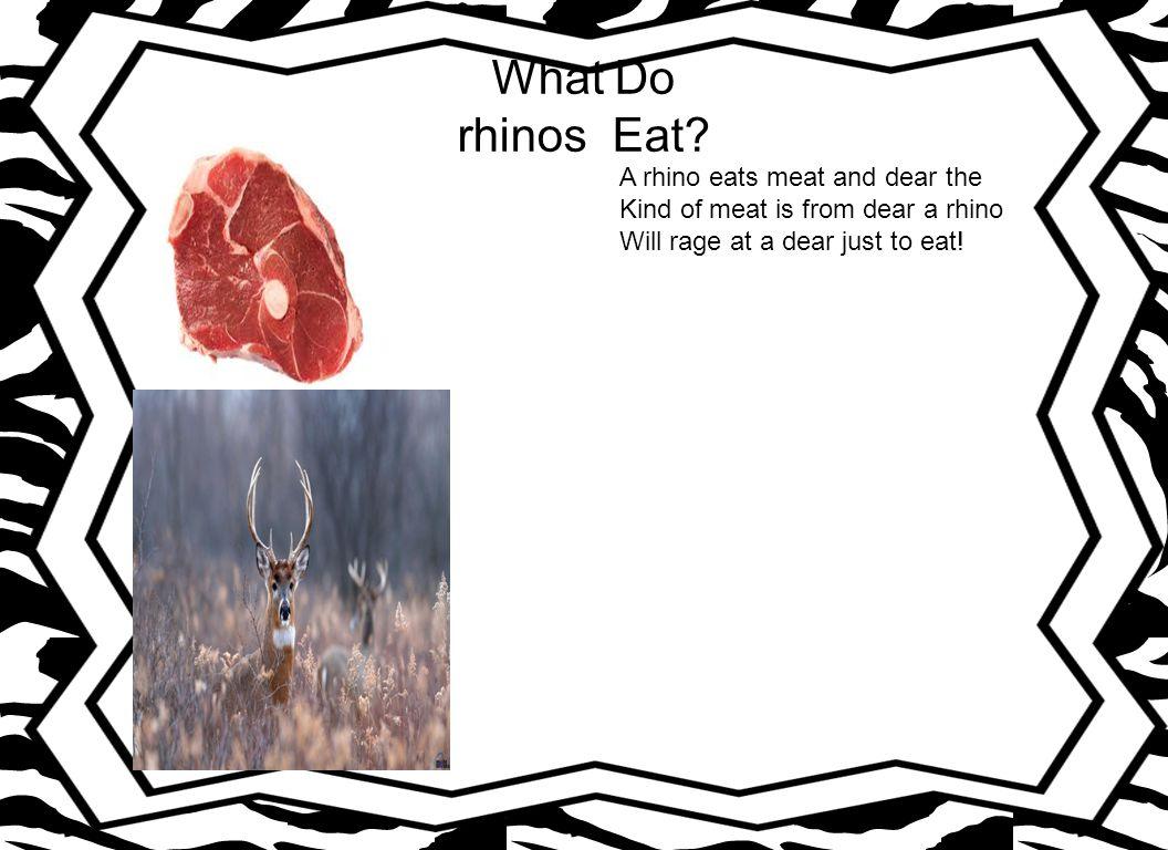 Where Do rhinos Live.