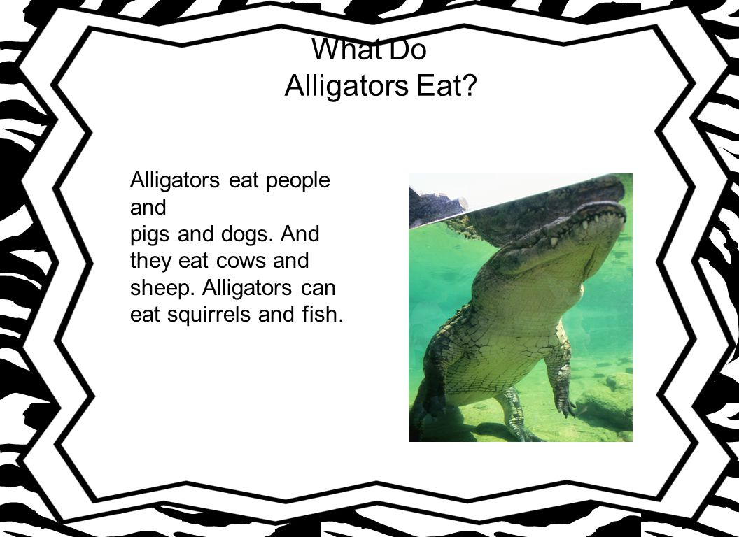 Where Do alligators Live.Alligators live in lakes and swamp.